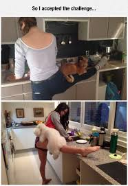 Dog Cooking Meme - cooking with pets the meta picture