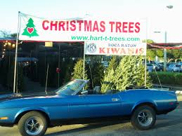 christmas tree lot k mart parking lot boca raton fl