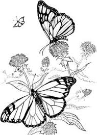butterfly coloring pages free butterfly coloring pages kid crafts animals u0026 all