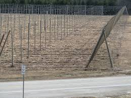 project aims to increase hops production in nebraska nebraska