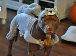 33 of the best halloween costumes adults kids and pets team