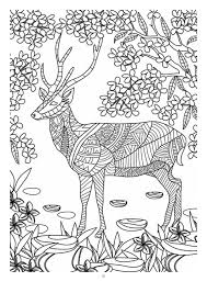 mind massage colouring book for adults coloring books
