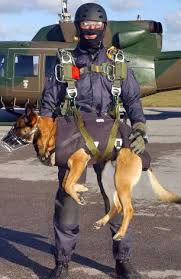 belgian shepherd malinois military the dogs of the navy seals navy seals