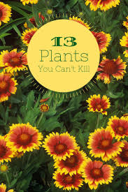 13 no kill plants for beginners u003e http www hgtvgardens com