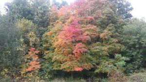 michigan fall colors motorcycle ride video oakland county moms