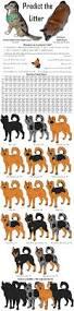e locus australian shepherd predict the litter german shepherd dog mixes by leonca on deviantart