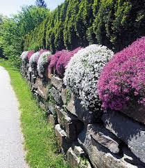 steingarten phlox mix 4 pflanzen günstig online kaufen mein