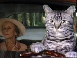 Driving Miss Daisy Meme - category toonces the cat the emmett lee dickinson museum