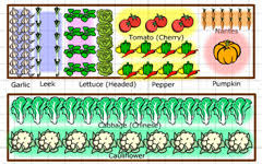 Veg Garden Layout S Delicious Garden Garden Planner