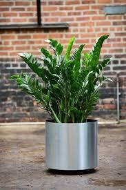 plant delivery plant rentals plant maintenance and landscape design service for