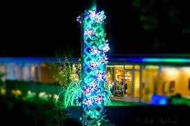 Bellevue Botanical Garden Lights A D U0027lightful Garden In Bellevue