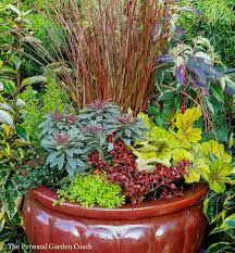 container plants fine foliage