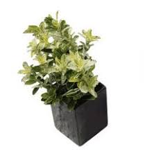 wall mounted planters houzz