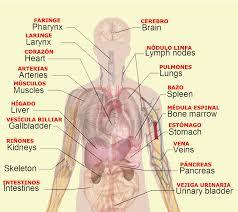 Heart External Anatomy External Human Body Parts
