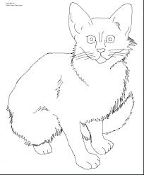 cute kitten coloring pages free printable puppy baby stock