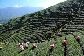 Rock Garden Darjeeling by 10 Best Places To Visit In And Around Darjeeling