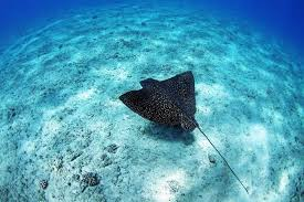 Hawaii snorkeling images Snorkeling in hawaii hawaii snorkeling islands jpg