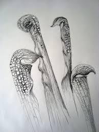 100 best sketch up images on pinterest flowers botanical