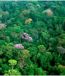 what you can do to protect biodiversity