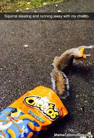 Cheetos Meme - silly squirrel cheetos are for humans memecommunity com