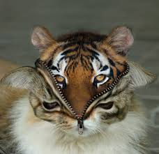 funny hybrid animals cat tiger photoshop costume halloween