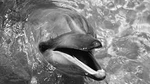 black and white wallpapers animals hd animals wallpapers