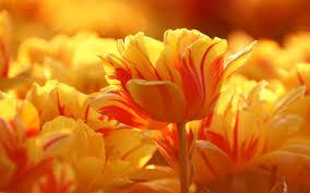 Beautiful Flowers Ideas On Beautiful Blue Wedding Bouquets Ipunya Flower Ideas