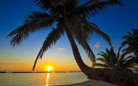 Palm Tree Wallpaper Palm Tree Beach Wallpaper 49772 2560x1600 Px Hdwallsource Com