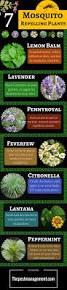 7 mosquito repelling plants to get rid of mosquitoes from your