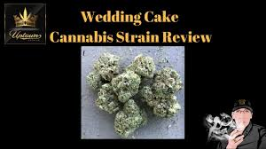 wedding cake genetics wedding cake strain review