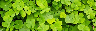 10 favorite st patrick u0027s day email examples