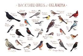 Backyard birds of oklahoma field guide art print handmade