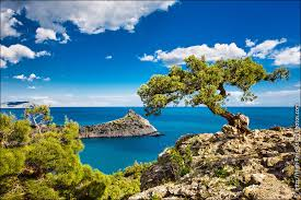 tree and sea high quality stock photos crimea high resolution