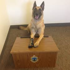 belgian malinois vermont join 802vsp k9 buck and rockonesock to vermont state police