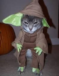 funniest costumes top 17 of the funniest cat costume ideas