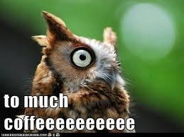Too Much Coffee Meme - i can has cheezburger too much coffee funny animals online
