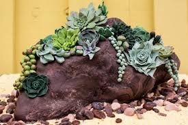 Succulent Rock Garden Succulent Rock Garden Cake Cakecentral