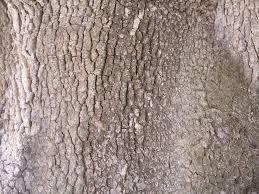 texture tree bark 5 bark lugher texture library