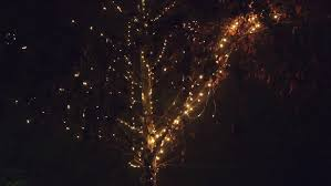 blinking led light decoration on deciduous tree in