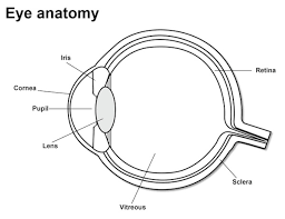 parts of the eye eye anatomy look after your