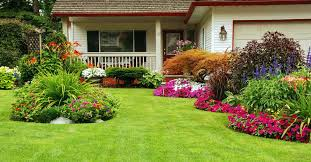 premium grass seed for home lawns pennington