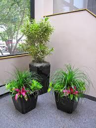 envirogreenery interior plants office plants for massachusetts