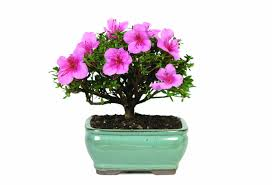 15 miniature plants that will enlarge your decor bonsai trees