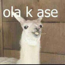 Llama Meme - image 462037 ola k ase know your meme