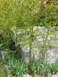 Bamboo Backyard Plant Bare Root Bamboo Hgtv