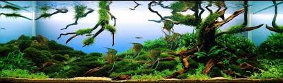 Aquascape Design Layout How To Design And Aquascape Your Aquarium Leonardo U0027s Reef
