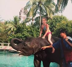 The Blind Men And The Elephant Analysis Thailand U0027s Ning Nong The Elephant Saved Amber Owen In 2004 Tsunami