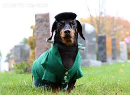 Halloween Costumes Wiener Dogs 356 Crusoe Celebrity Dachshund Images