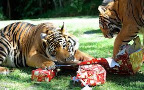christmas party packages on the gold coast dreamworld