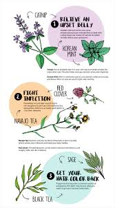 native american plants used for medicine 101 infographic examples on 19 different subjects visual